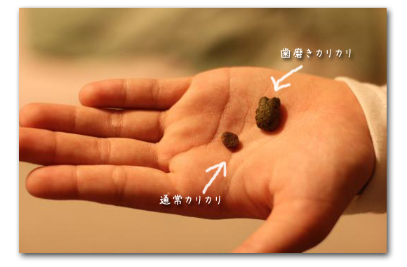 ○○の秋 食欲チョコたん2