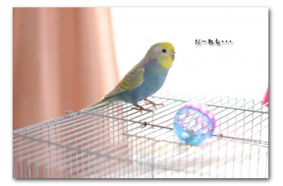 探究心ピーちゃん2