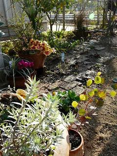 大晦日の庭
