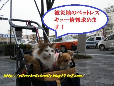 P3120009_20110330234230.jpg