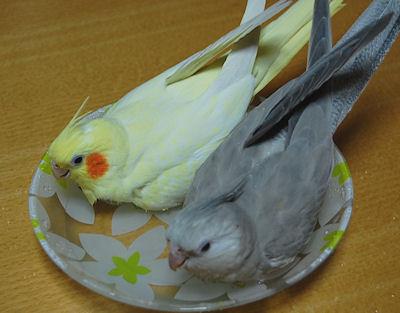 20110117mizuabi.jpg