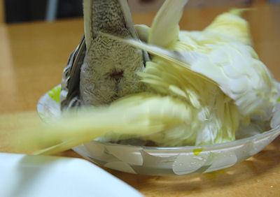 20110117mizuabi3.jpg