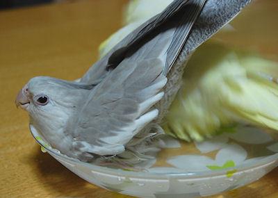 20110117mizuabi4.jpg