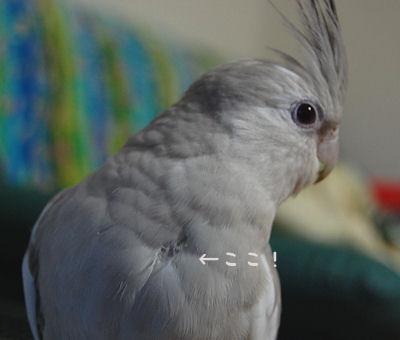 20110131rei.jpg