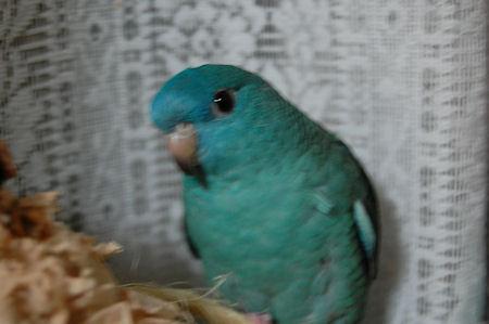 20110208merumo4.jpg