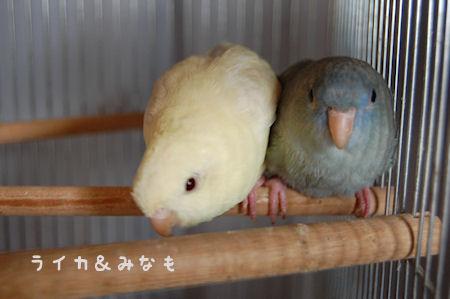 20110208raimina.jpg