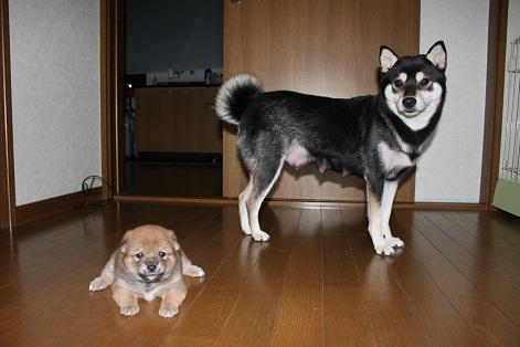 2親子写真