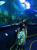 マレーシア クアラルンプール 水族館