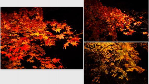 2010-12-036_convert_20101219201727.jpg