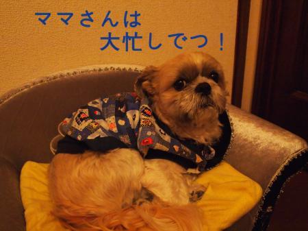 ・搾シ鳳C290069_convert_20101230035726