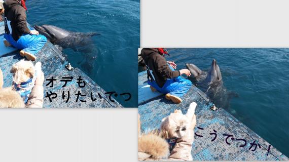 2011-01-125_convert_20110117153124.jpg
