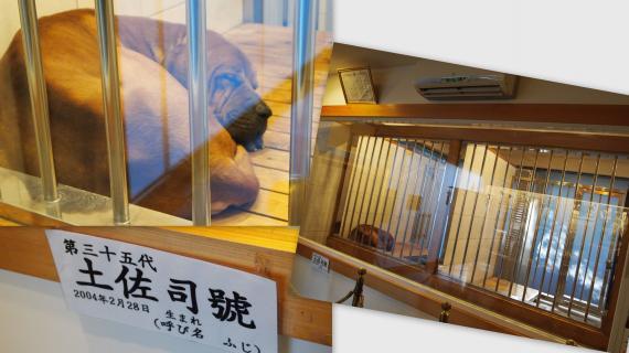 2011-01-135_convert_20110124173748.jpg