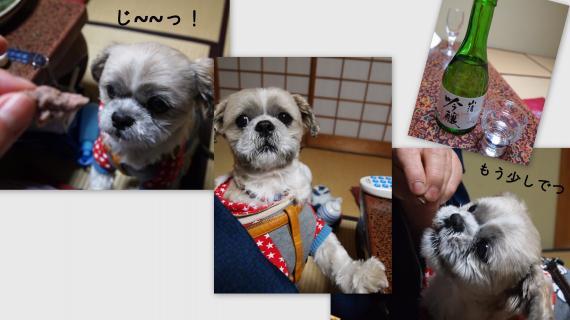 2011-02-026_convert_20110209234706.jpg