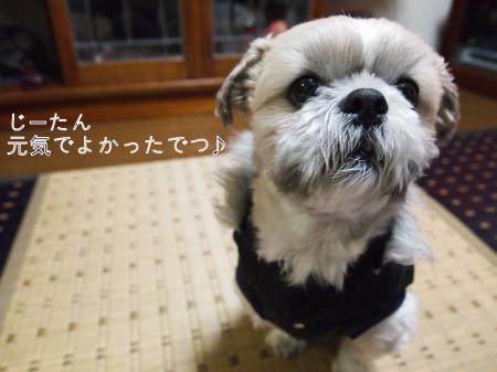 ・搾シ捻C310091_convert_20110106021636