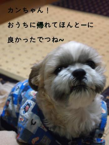 ・搾シ猶1100181_convert_20110110220134