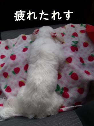 ・搾シ魯SCF8025_convert_20110110015144