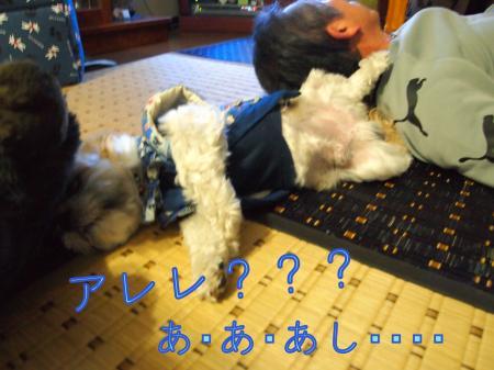 ・搾シ撤1160612_convert_20110116210756