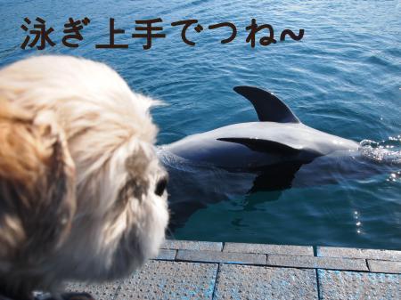 ・搾シ姫1120226_convert_20110117153334