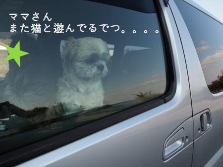 ・搾シ姫1120285_convert_20110119023636