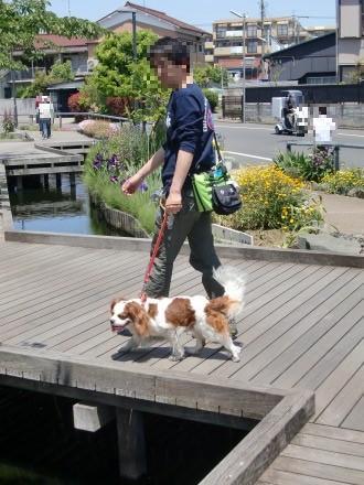 せせらぎ散歩♪