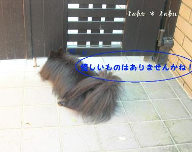 011_20101101151424.jpg