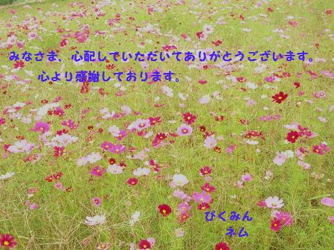 kosumosu_20101017143841.jpg