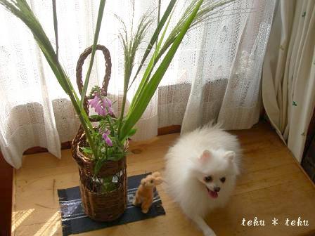 ne_20100922202452.jpg