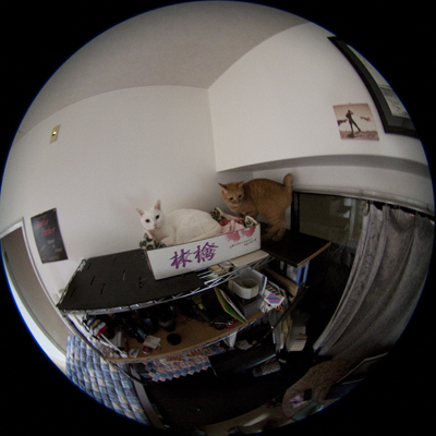 20101010_01.jpg