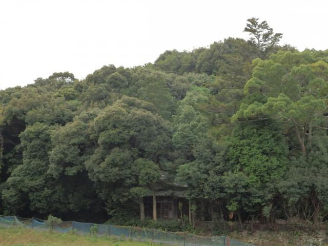 生長した森林は見かけは変わらない