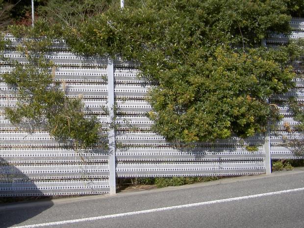県道端のフェンスに登る
