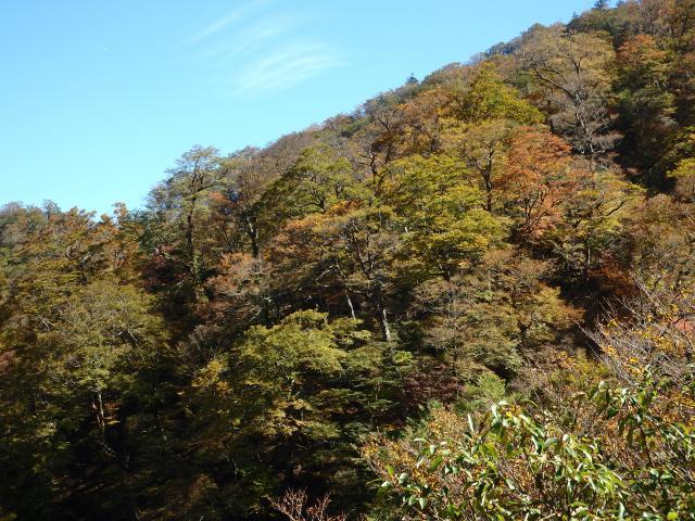 高城山の山頂北斜面のブナの自然林