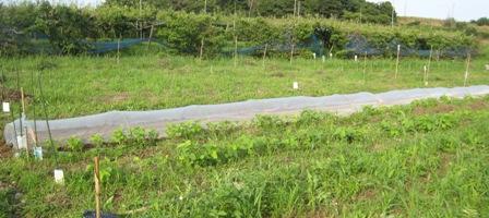 自然農の限界 (2)