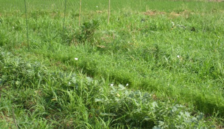 農薬と自然農 (3)