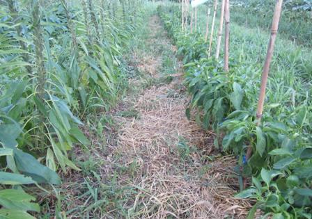 猛暑の農園 (2)