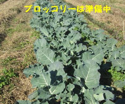2013冬野菜 (4)