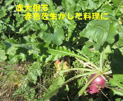 2013冬野菜 (6)