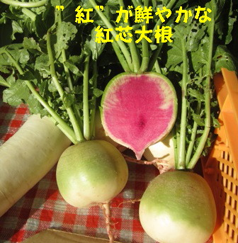 2013冬野菜 (2)