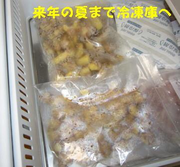 ショウガ冷凍保存 (5)