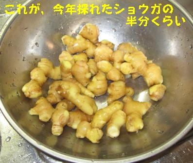 ショウガ冷凍保存 (3)