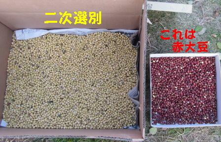 味噌用ダイズ脱穀 (4)