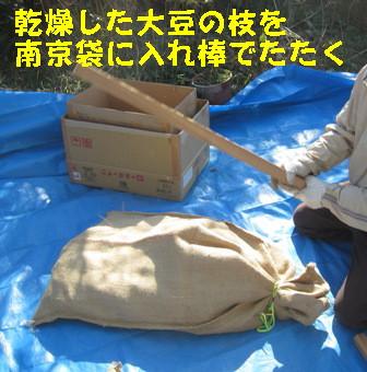 味噌用ダイズ脱穀 (2)