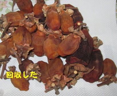 干し柿 (3)