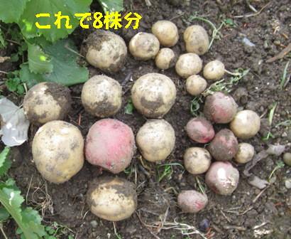 ジャガイモ日照との関係 (4)