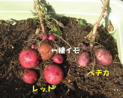 12.31収穫