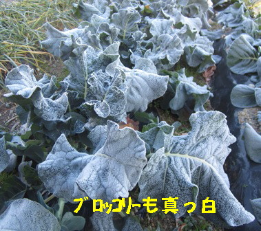 霜の朝 (4)