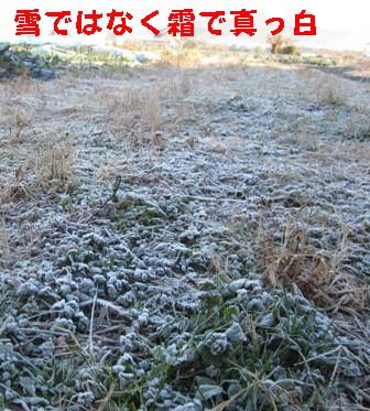 霜の朝 (1)