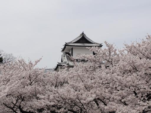 20120415金沢城-1