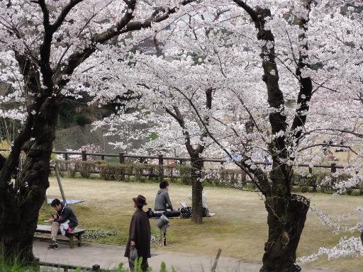 20120415金沢城の花見-2