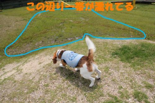 IMG_6034-1.jpg