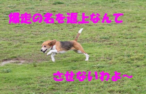 IMG_6248-1.jpg